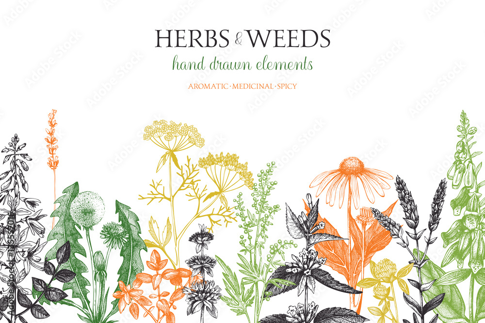 Fototapety, obrazy: Vector design with hand drawn weeds and herbs. Decorative background with vintage medicinal and aromatic plants sketch.