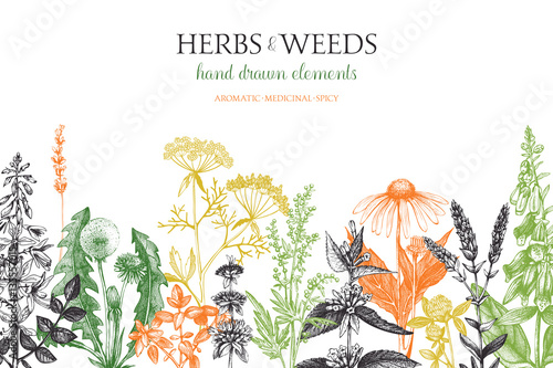 Photo  Vector design with hand drawn weeds and herbs