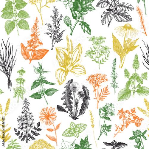 Tło z ręcznie rysowane chwasty i zioła. wzór z rocznika szkic roślin leczniczych.