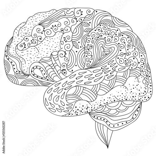 Human brain doodle decorative curves, creative mind ...