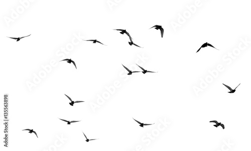 Recess Fitting Bird flock of pigeons on a white background