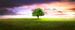 canvas print picture - einsame Baum.