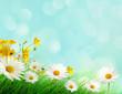 Leinwanddruck Bild Spring meadow with wild flowers