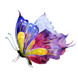 Fototapeta Motyle - butterfly,watercolor,on a white
