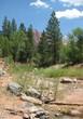 Taylor Creek at Kolob Canyon at Zion National Park