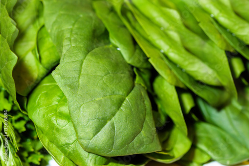 Fototapety, obrazy: Fresh green spinach leaves detailed close up