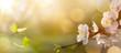 Leinwandbild Motiv Spring flower background; Easter landscape