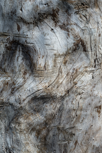 Leinwand Poster Natural wood grain texture image
