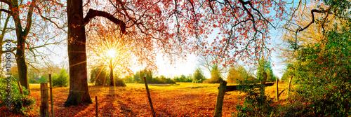 Garden Poster Pale violet Idyllische Landschaft im Herbst mit Wald, Wiese und Sonne