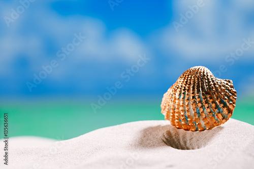 Valokuva  golden  tropical shell on white beach sand under sun light