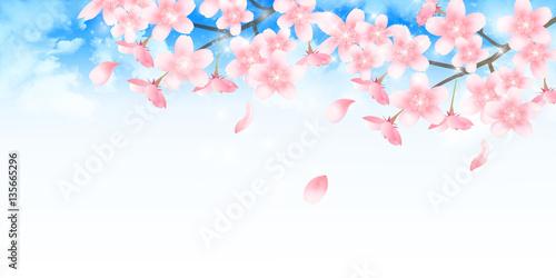Poster Blanc 桜 春 学校 背景