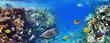 canvas print picture - Colorful coral reef fishes of the Red Sea.