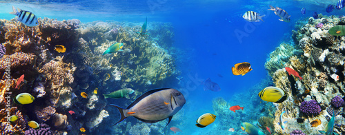Poster Koraalriffen Colorful coral reef fishes of the Red Sea.