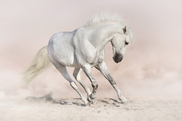 White stallion in light background