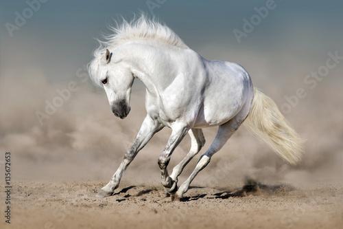 Fototapeta White stallion run in desert against blue sky obraz