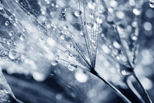 Macro, Abstract Composition With Colorful Water Drops On Dandelion Seeds