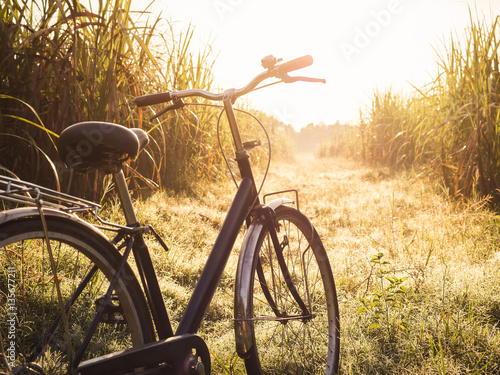 Foto op Plexiglas Fiets Bicycle ride outdoor Summer meadows field sunrise Vintage tone