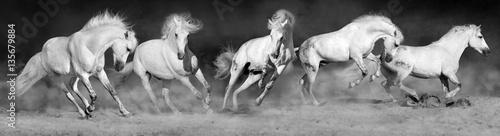 Fotografia, Obraz Horses run gallop in sandy field
