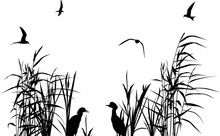 Heron Between Black Reed Silhouettes Isolated On White