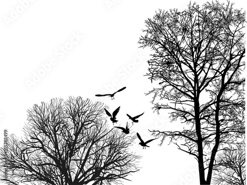 Photo  seagull flying between black bare trees crowns