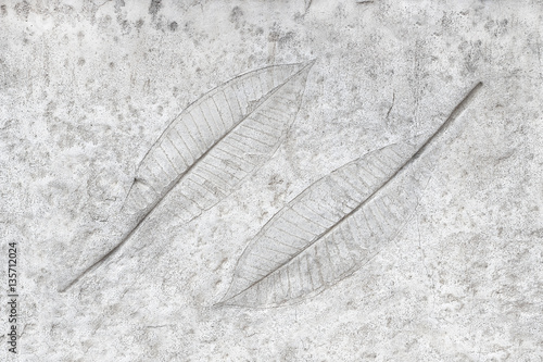 Fotografía  marks of leaves on the concrete