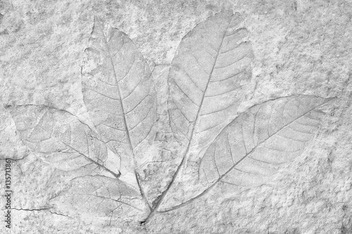 Láminas  marks of leaves on the concrete