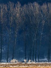 Panel Szklany Drzewa alberi