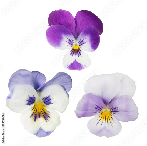 Papiers peints Pansies set of three isolated pansy blooms