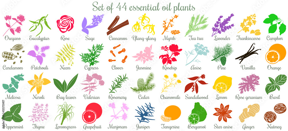 Fototapety, obrazy: Big set of 44 essential oil plants. flat style, colored