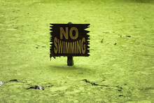 No Swimming Sign In Algae Alli...