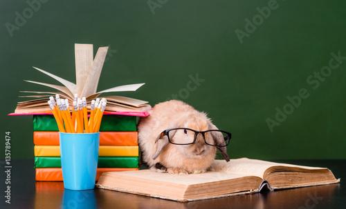 Plakat Mądry królik z eyeglasses siedzi na książkach blisko opróżnia zielonego chalkboard