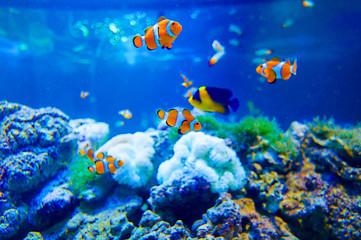 Tropikalna ryba w zbiorniku