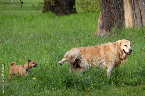 Fotografía  Hunde Rüden im Park Verhalten Markieren