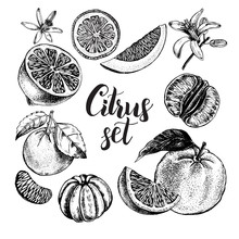 Hand Drawn Set Of Different Kinds Of Citrus Fruits. Food Elements Collection For Design, Vector Illustration.