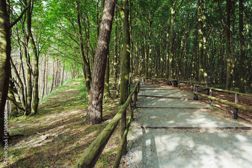 Tuinposter Weg in bos path in forest