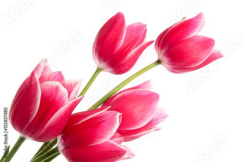 Foto op Canvas Tulp Bouquet