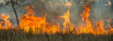 Fototapeta Sawanna - Bushfire in the Kimberley region, Western Australia