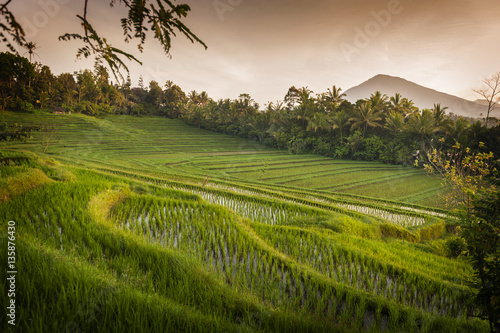Foto auf Gartenposter Reisfelder Bali Rice Fields. Bali is known for its beautiful and dramatic rice terraces. The graphic lines and verdant green fields are a vision to behold. Some of the fields are hundreds of years old.