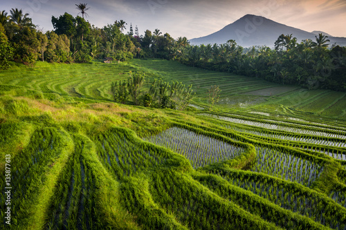 Foto op Plexiglas Indonesië Bali Rice Fields. Bali is known for its beautiful and dramatic rice terraces. The graphic lines and verdant green fields are a vision to behold. Some of the fields are hundreds of years old.