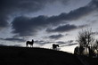 Cavalli all'alba con nuvole
