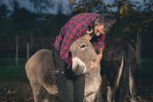 Man Taking Care Of A Donkey Ou...