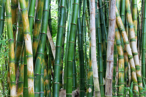 In de dag Bamboo green bamboo forest