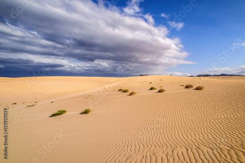 Poster de jardin Desert de sable dunes de corralejo