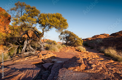 Printed kitchen splashbacks Australia Native pine trees in flower at the top of Kings Canyon