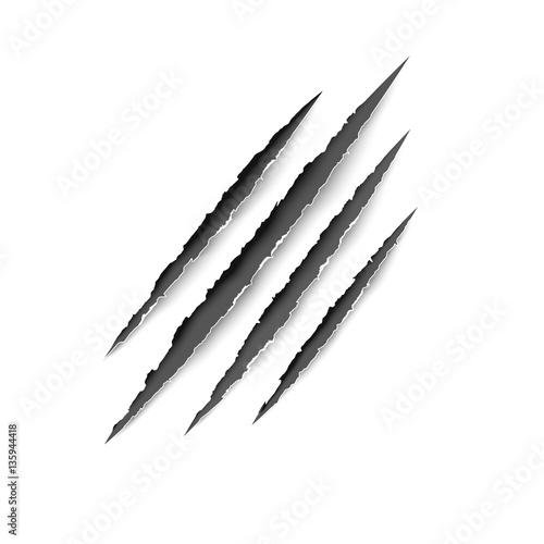 Fotografie, Obraz  Animal scratches - vector