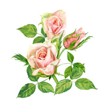 Group Of Roses, Pink Flowers A...