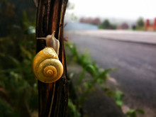 Snail Climbing On The Tree