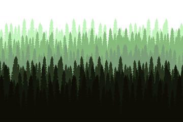 Fototapeta Pine forest landscape vector