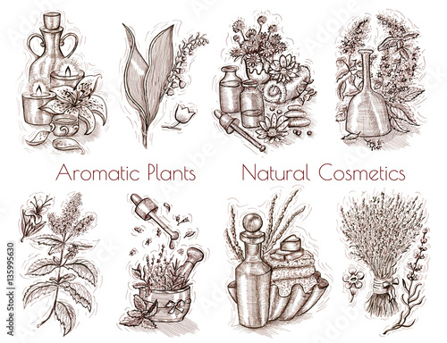 Cadres-photo bureau Style Boho Graphic set with aromatic plants and natural cosmetics still life