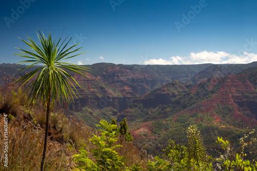 Printed kitchen splashbacks Canary Islands Waimea Canyon